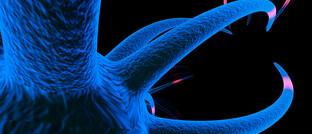 Nervenzelle unter dem Elektronenmikroskop