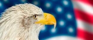 US-Wappenvogel Weißkopfseeadler