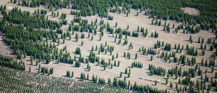 Forst-Programm im Norden der USA