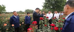 Chinas Staatspräsident Xi Jinping beim Besuch einer Rosenzucht
