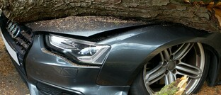 Umgestürzter Baum beschädigt Auto