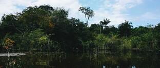 """Brasilianischer Urwald, auch die """"grüne Lunge"""" der Erde genannt"""
